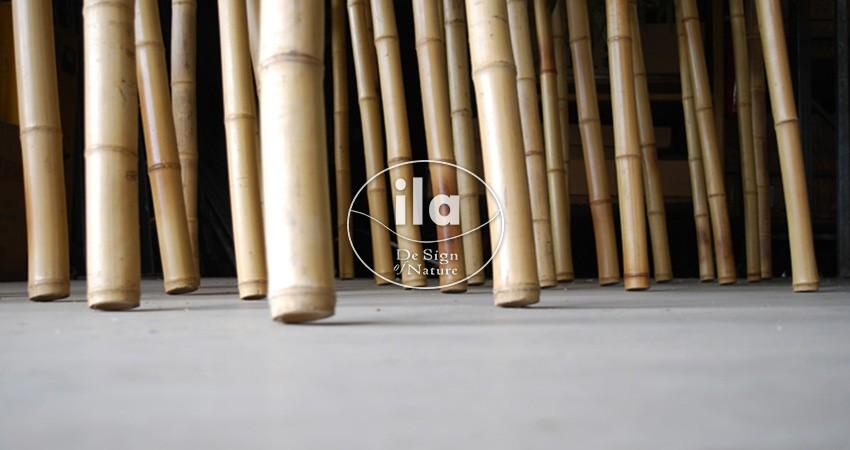 Bamboo Wild Boschetto Gigante