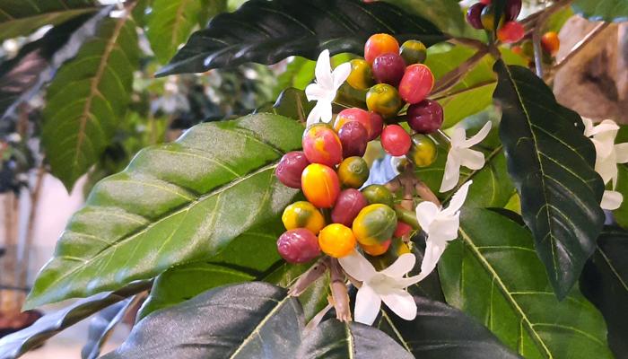 I frutti