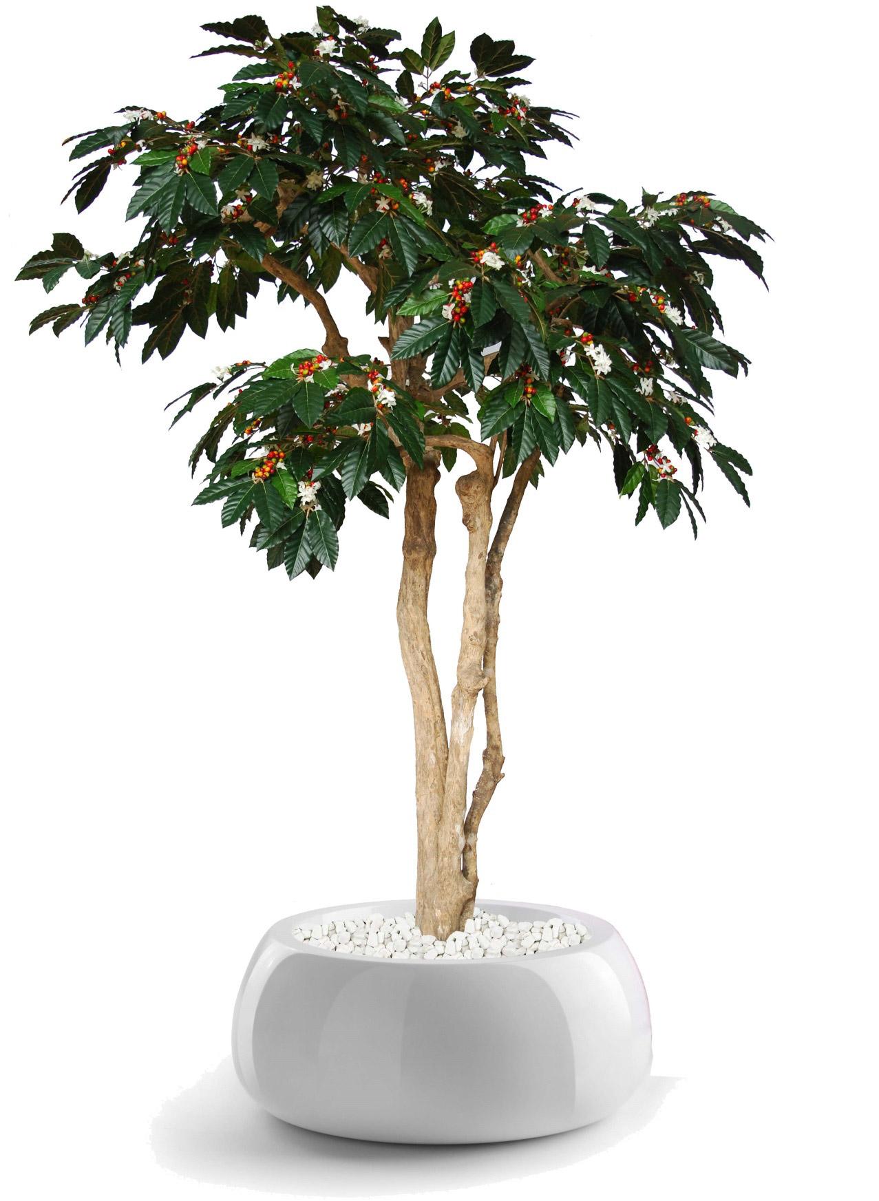 Semi Natural Plants